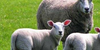5 Sene Geri Ödemesiz Hayvan Kredisi Nasıl Alınır? Çiftçiye Müjde!