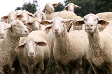 TKDK Hayvancılık Destekleri Üst Sınırı Yüzde 70 Oldu