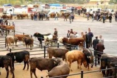 Hayvan Almak İsteyen Çiftçiye Devlet Kredisi (GÜNCEL)