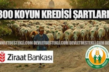 300 Koyun Ziraat Bankası ve Tarım Kredi Kooperatifi Şartları