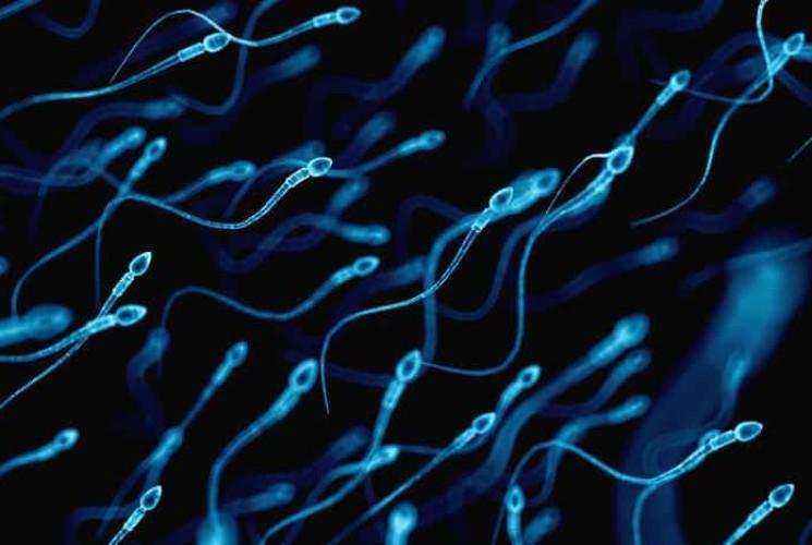 Erkeklerde Doğurganlığı Ve Sperm Kalitesini Arttırma Yöntemleri!>