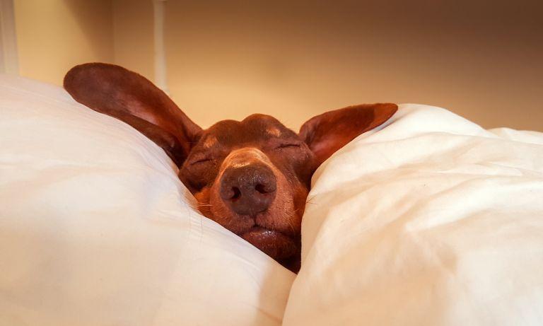 Uykuya Dalmakta Problem Çekenler Dikkat! İşte Uykuya Dalmanızı Sağlayacak Taktikler>